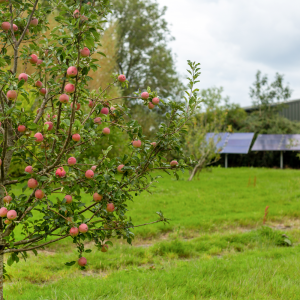 Orchard at Downsview Vineyard