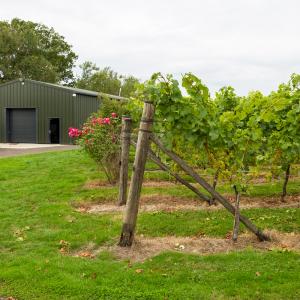 Vineyard Building