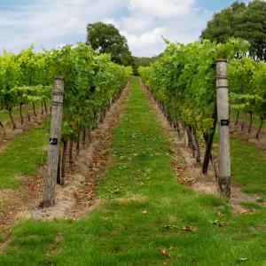 Beautiful Vineyard Events